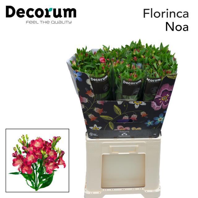 <h4>Flor Noa</h4>