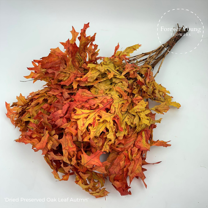 <h4>Dried Preserved Oak Leaf Autumn</h4>