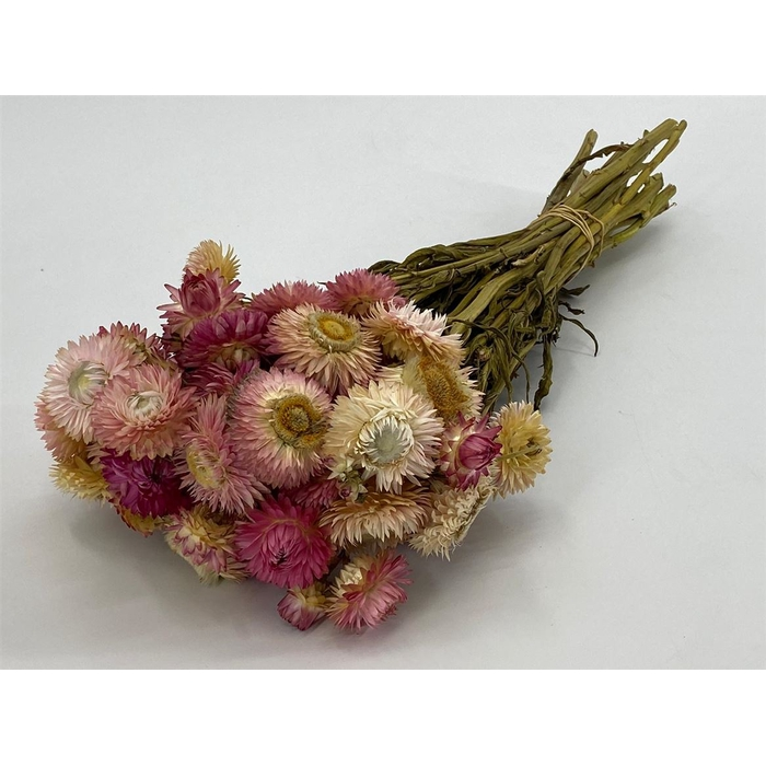 <h4>DRIED FLOWERS - HELICHRYSUM PINK</h4>