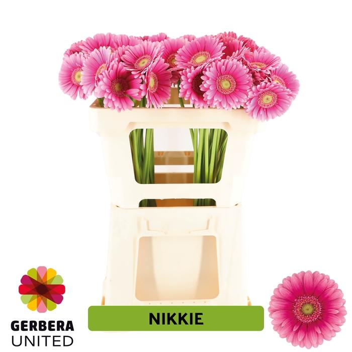 <h4>GE MI Nikkie water</h4>