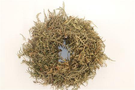 <h4>Wr Varen Leaves Naturel 23cm</h4>