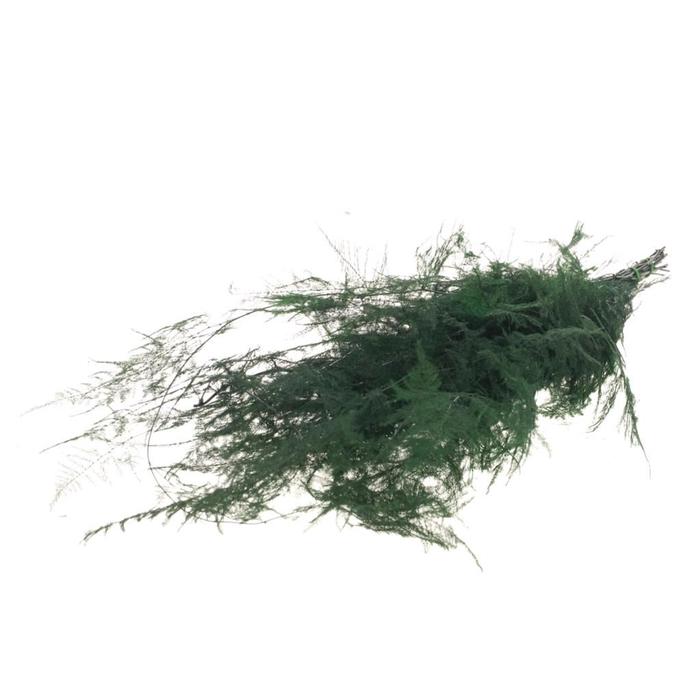<h4>Asparagus pres moss green</h4>