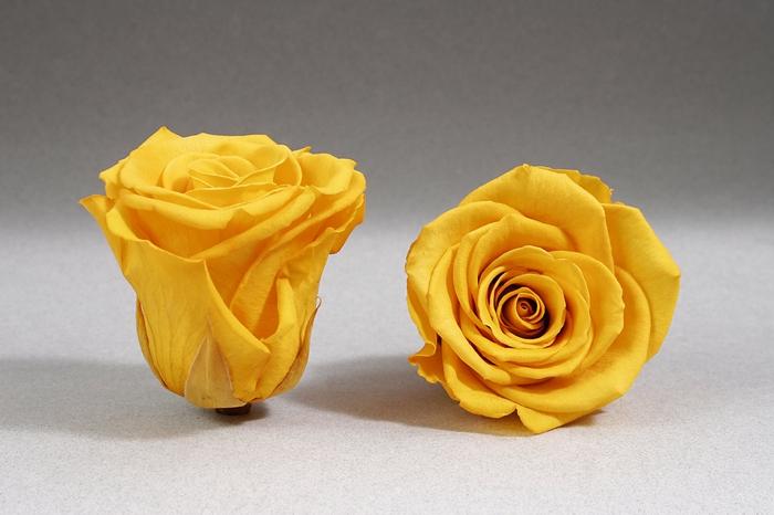 <h4>Rose stab. XL Yel-02</h4>