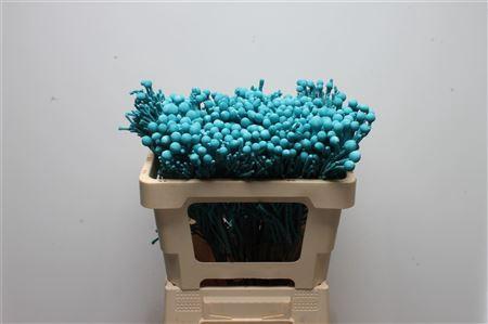 <h4>Kaaps Brunia Silver Ice Blue</h4>