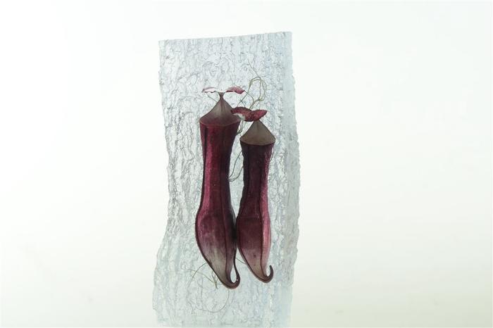 Kristal 2 Nephentus