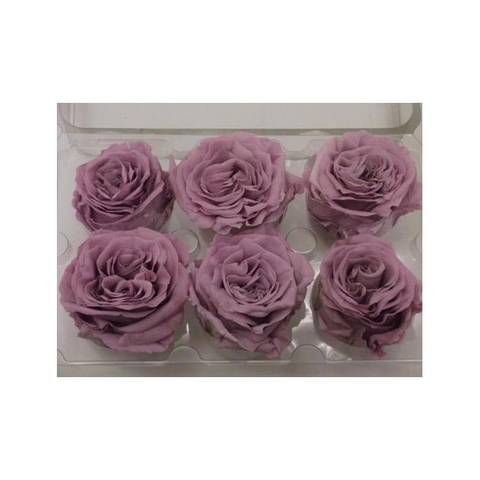 <h4>R Prs Wild Lavender</h4>