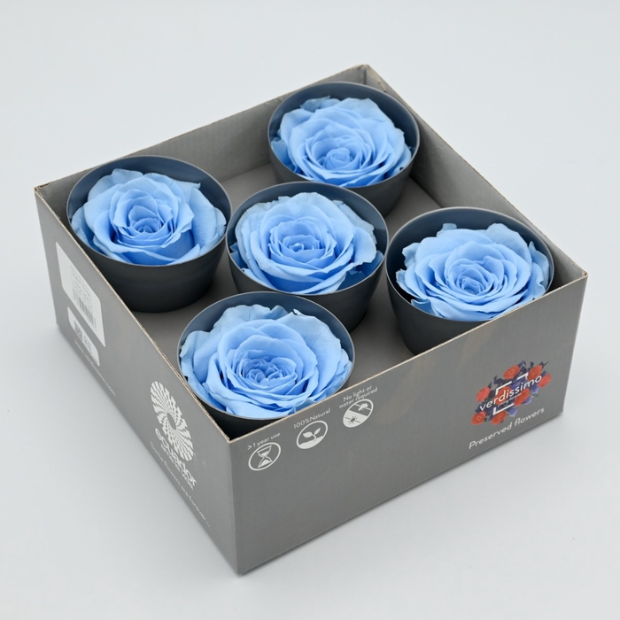 <h4>R PR Queen Light Blue</h4>