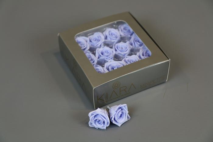 <h4>Rosa Preserved Cool Lavender Mini Petite</h4>