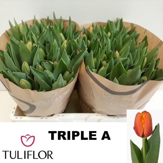 <h4>TU EN TRIPLE A</h4>
