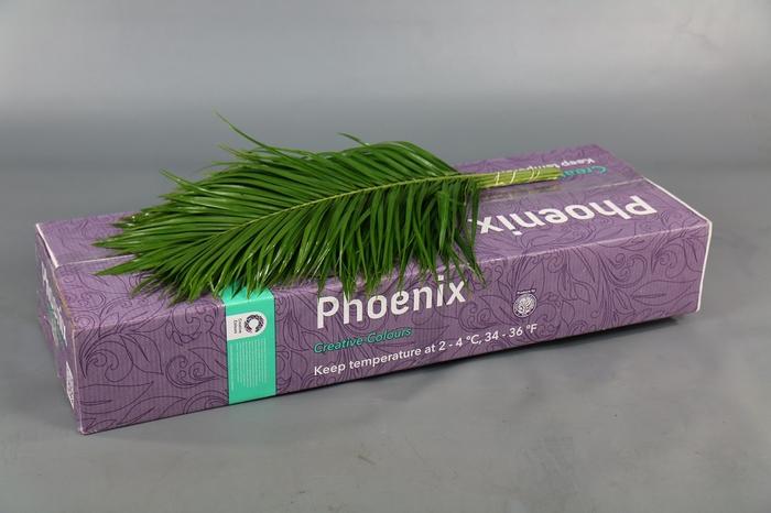 <h4>Phoenix Creative Colours</h4>