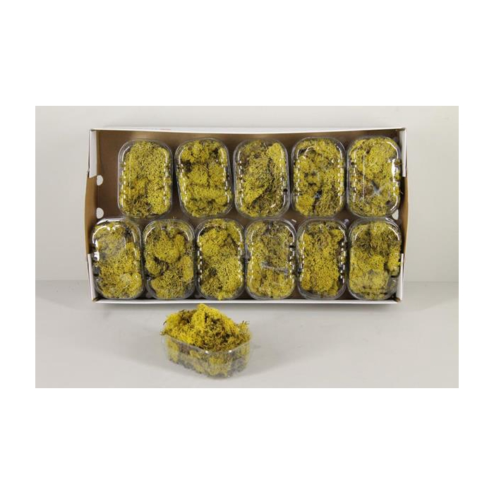 <h4>Moss Icelandic Yellow Box</h4>