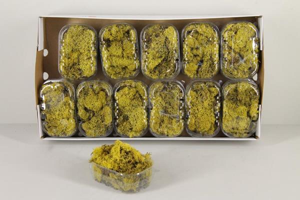 <h4>Moss Icelandic Yellow Box</h4>