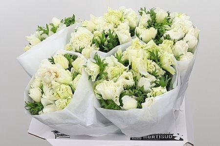 <h4>Anemone Fullstar White</h4>