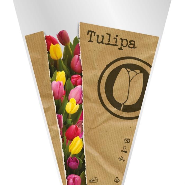 <h4>Hoezen Mono Tulp 40*30*12cm x50</h4>