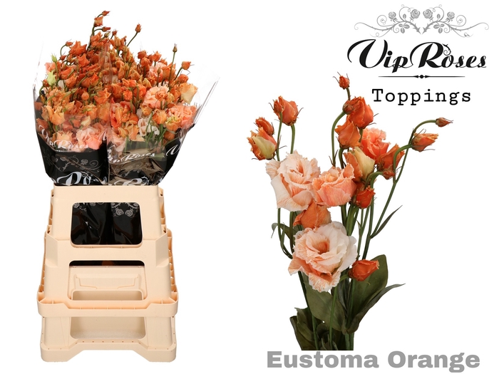 <h4>Vip Eust G Alissa Overig Orange</h4>