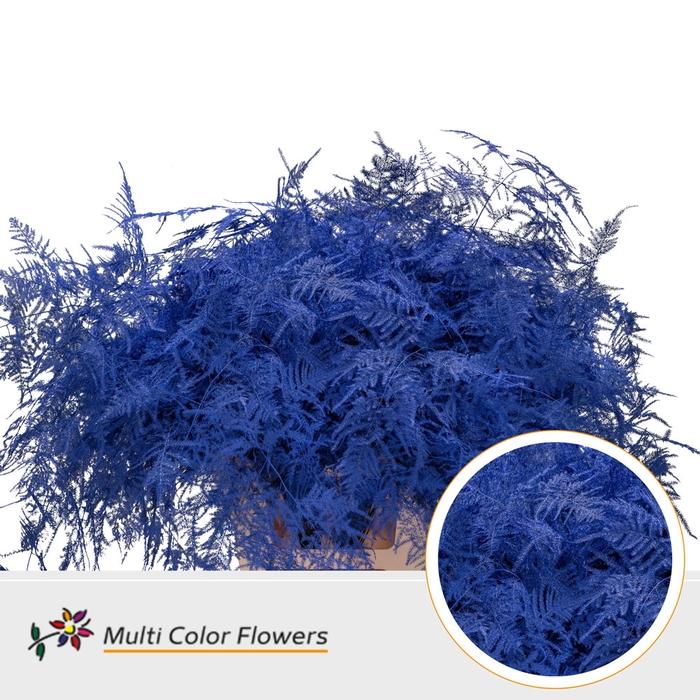 <h4>Asparagus extra veren gekleurd Blauw donker</h4>