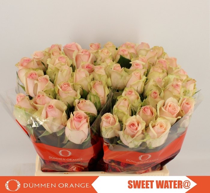 <h4>R GR SWEETWATER@</h4>