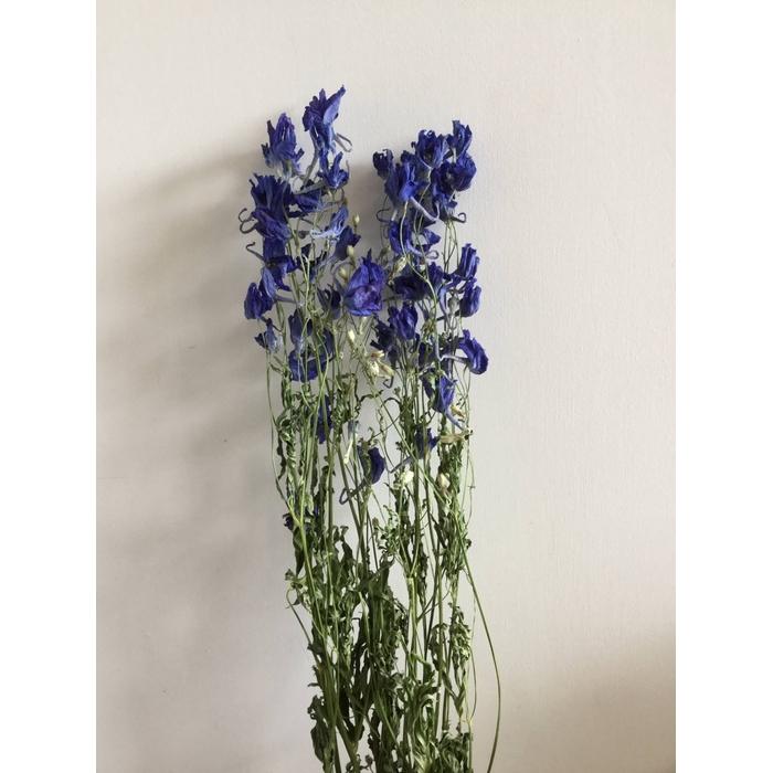 <h4>DRIED FLOWERS - DELPHINIUM VOLCKERFRIEDE 10PCS</h4>