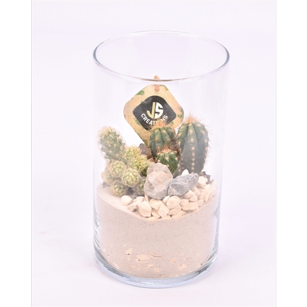 <h4>Glas cilinder 12 cm</h4>