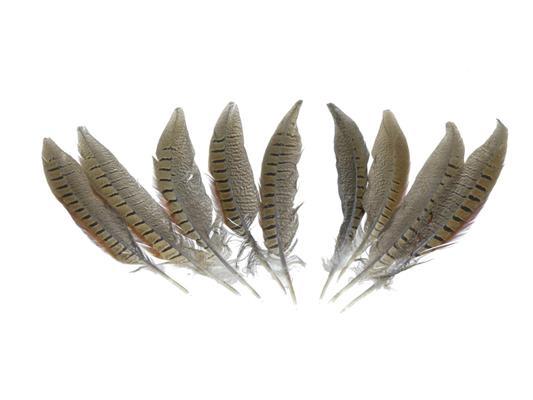 <h4>Feather Pheasant 20-25cm</h4>