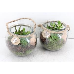 arr. PL - Glas bol touw succulent mix