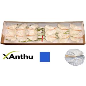 ANTH A ACROPOLIS