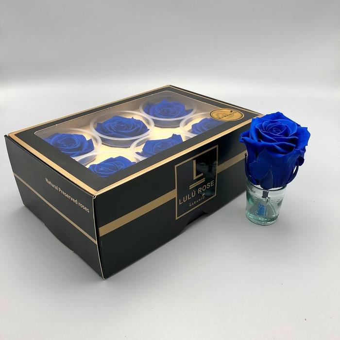 <h4>R PR Lulu (XL) Blue</h4>