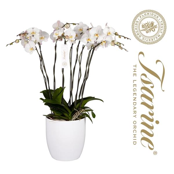 <h4>Tsarine® Nr32 Wit Grand Deco</h4>
