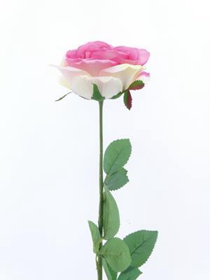 <h4>Af Rose Sco Blush Pink</h4>