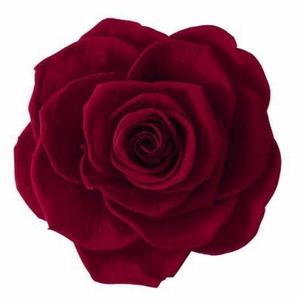 Rose Ava Burgundy
