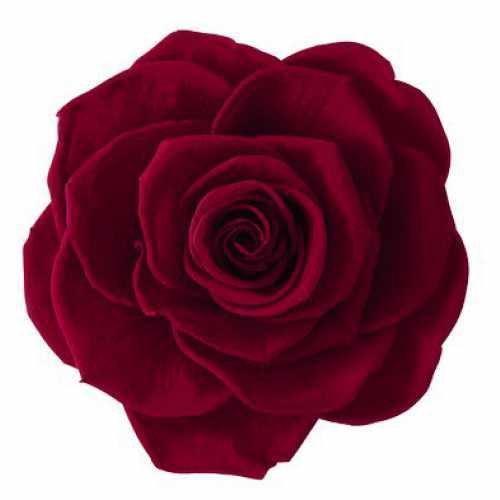 <h4>Rose Monalisa Burgundy</h4>