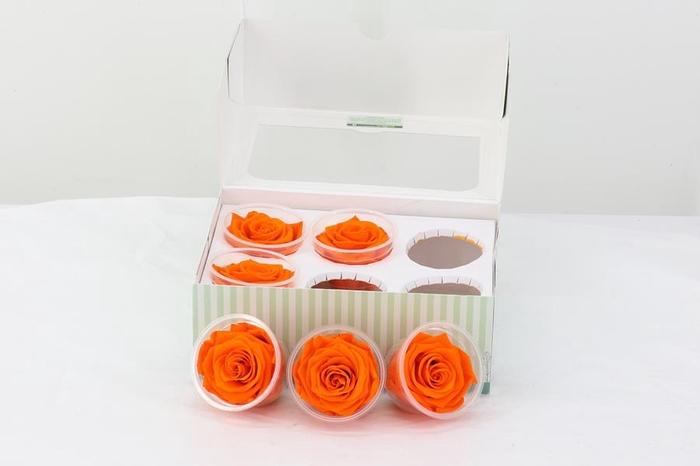 <h4>Preserv. Rs. Orange</h4>