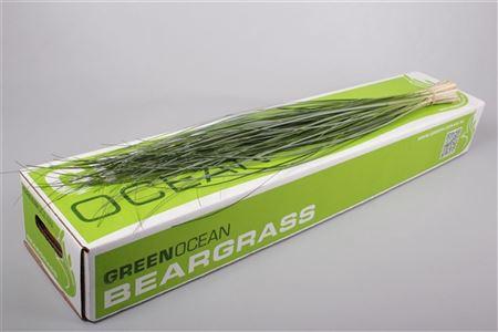 <h4>Dec Beargrass</h4>