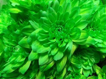 <h4>Chr T Baltica Green</h4>