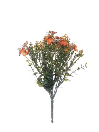 <h4>Allysum bush orange 23cm</h4>