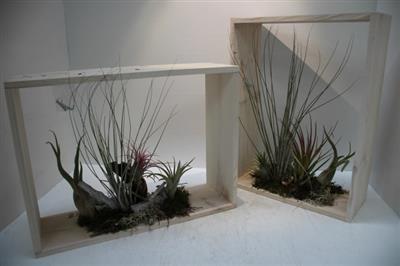 <h4>TILL RAAM 4 PLANT X3 GROOT</h4>