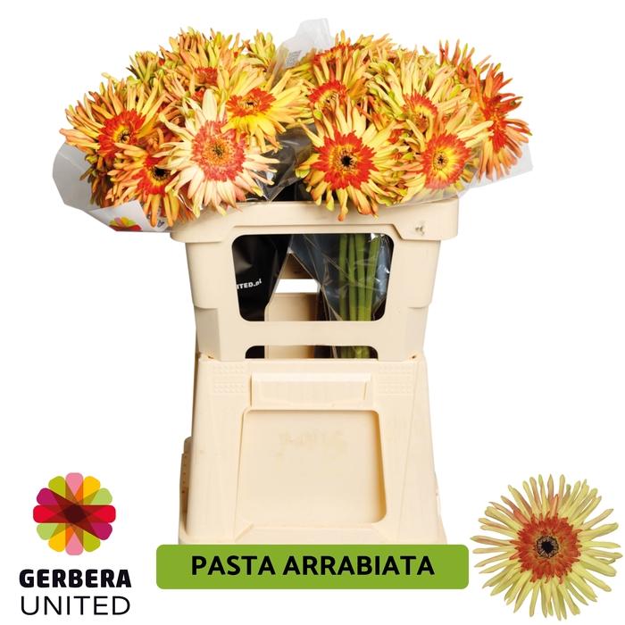 <h4>GE GR Pasta Arrabiata water</h4>