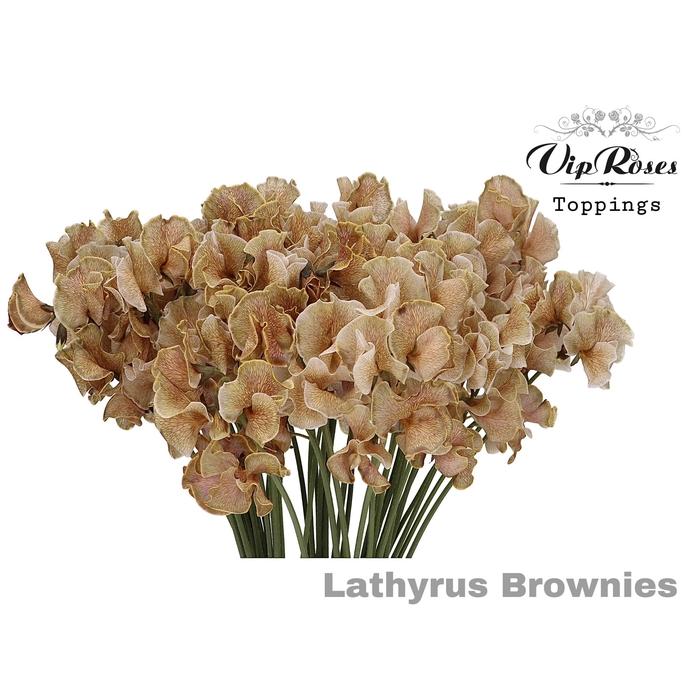 <h4>LATHYR BROWNIES</h4>