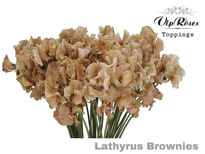 LATHYR BROWNIES