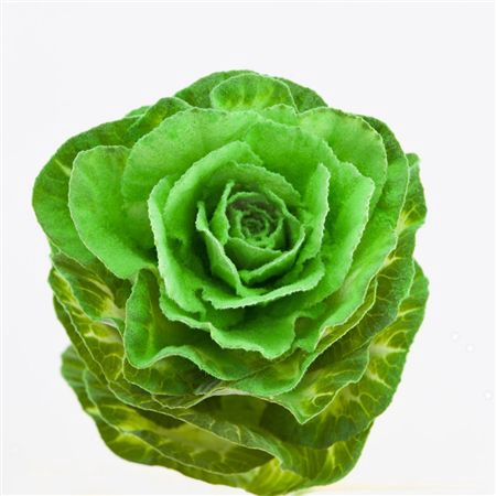 <h4>Brassica Powder Green</h4>