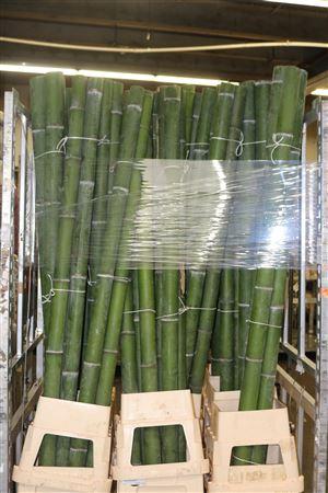 <h4>Bamboe 70-80 2meter</h4>