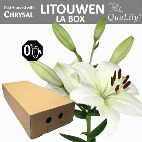 <h4>Li La Litouwen</h4>