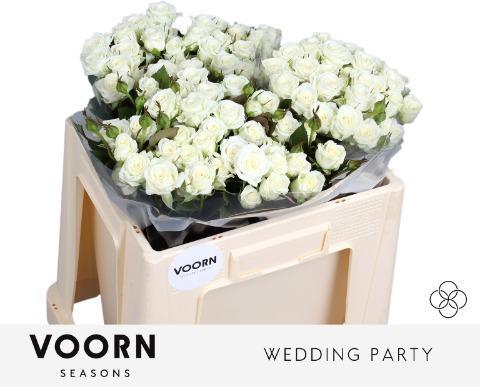 <h4>R TR WEDDING PARTY</h4>