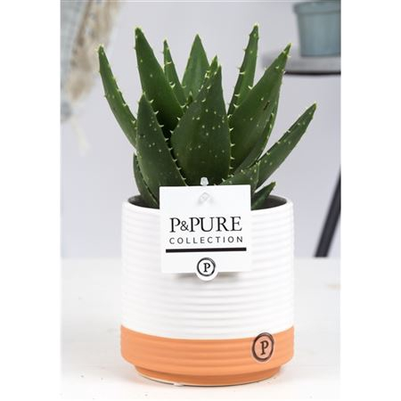 <h4>Aloe Mitriformis Keramiek Milou</h4>