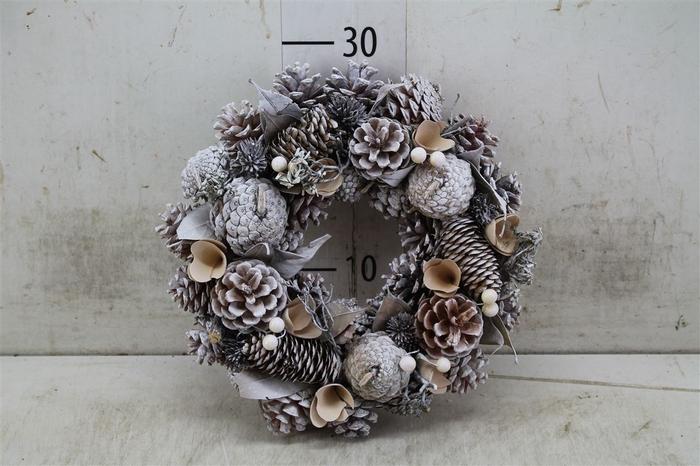 <h4>5325 Wr. Noble White Wash Christmas D30 H7 H7d30c</h4>