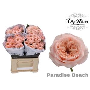 R KL PARADISE BEACH