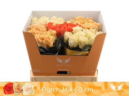 <h4>R Gr Dutch Mix</h4>