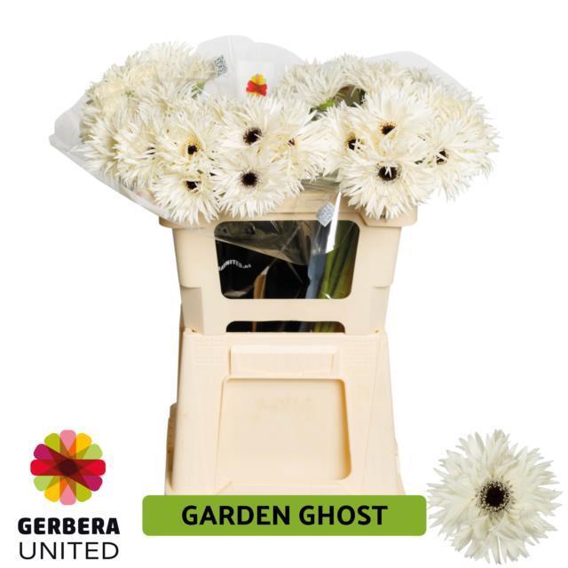 <h4>GE GR Garden Ghost water</h4>