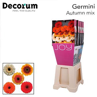 <h4>Ge Mi diamond Autumn mix</h4>