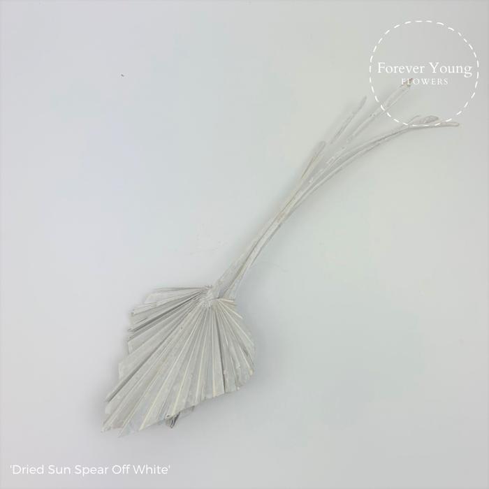 <h4>Dried Sun Spear Off White</h4>